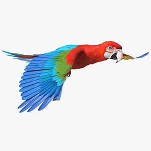 3D model Red and Green Macaw Parrot Flight Pose