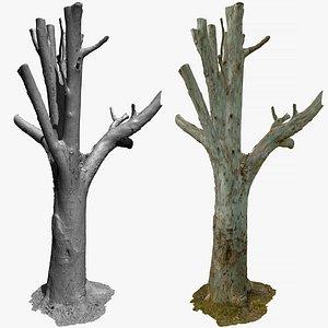 Tree Raw Scan 3x16k textures 3D model