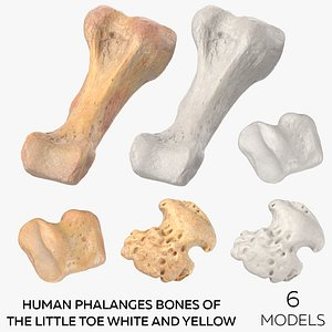 Human Phalanges Bones of the Little Toe White and Yellow  - 6 models model