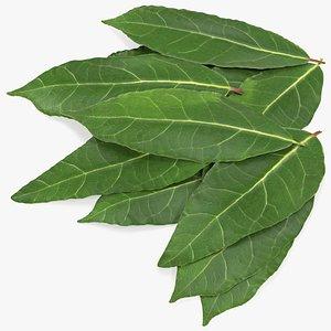 3D laurel leaves model