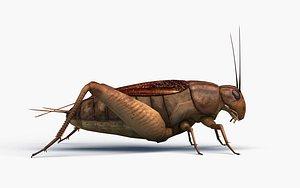 3D cricket nature bug model