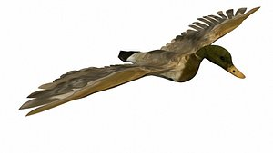 3D mallard bird