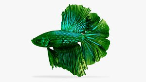 3D betta fish model