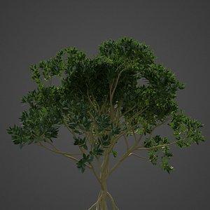 3D mangrove asia