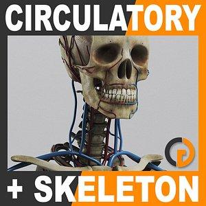 max human circulatory skeleton -