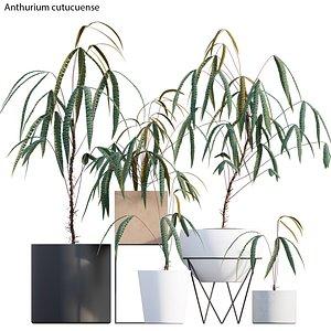 Anthurium cutucuense 3D