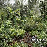 Rainforest Collection