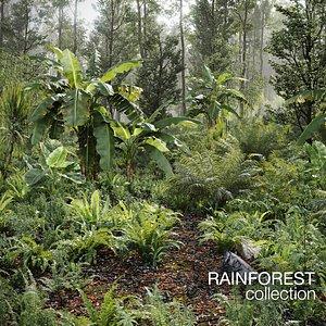Rainforest Collection 3D
