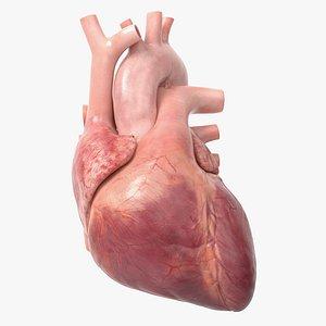 3D Human Heart v2 Animated model