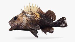 3D quillback rockfish variant model