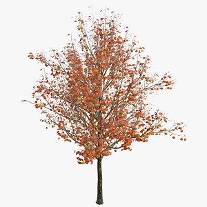 3D 1 tree model
