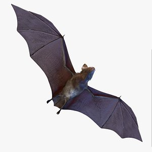 3D Realistic Bat lowpoly Rigged Animated model