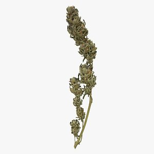 Cannabis Branch 01 model