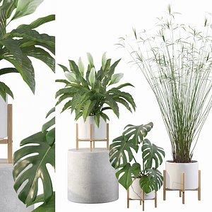 3D model peace lily plants