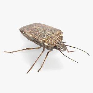 3D stink bug model