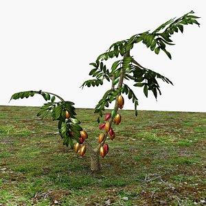 3D Cacao Tree
