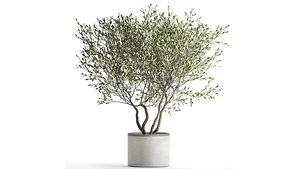 3D Olive tree in a flowerpot for the interior 970 model