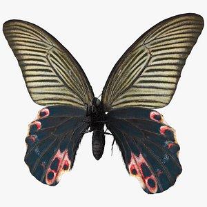 3D model Papilio Protenor Butterfly Female Fur