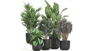3D plants flower pot model