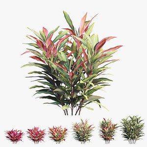 cordyline fruticosa plant 3D