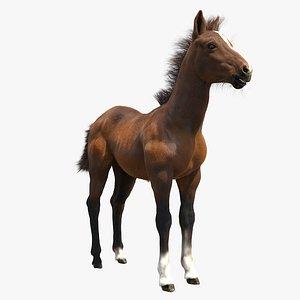 horse foal 3D