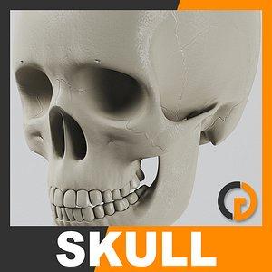 3d human skull - nose anatomy