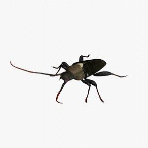 longhorn beetle 3D model