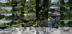forest scenes 3D model