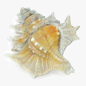 3D Gyrineum Perca Seashell