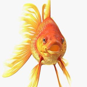 3D Orange Fancy Fantail Goldfish Rigged for Modo