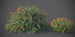 3D XfrogPlants Emu Bush - Eremophila Glabra