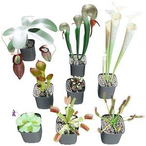 carnivorous plants 3D model