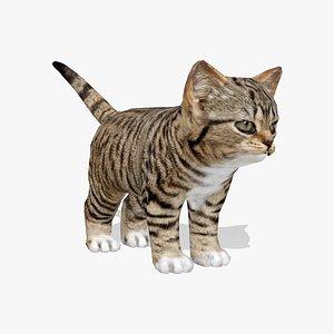 Kitten 3D