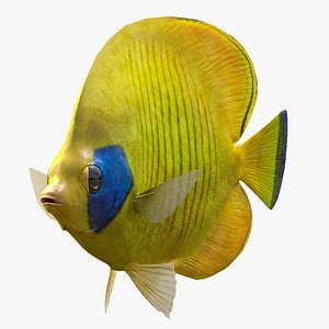 Bluecheek Butterflyfish 3D model