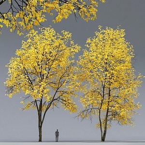 3D model tree ash ash-tree