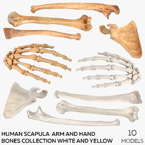 3D Human Scapula  Arm and Hand Bones Collection White and Yellow - 10 models