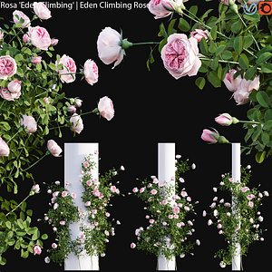 3D model Rosa Eden Climbing - rose 02