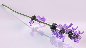 3D model plant lavender flower spices