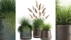 Reeds in a rusty flower pot for the interior 936 3D model