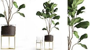 3D Ficus lyrata trees in a GLASS FLOWERPOT 958