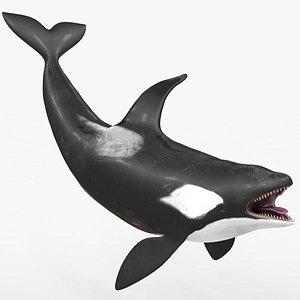 killer whale kill 3D model