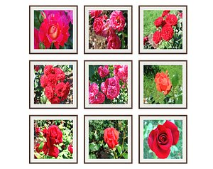 3D pictures flower photo