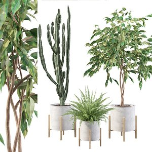 plants 095 3D model