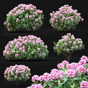 rhododendron bushes 3D model