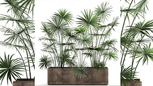 Palms in a flowerpot for the interior 938 3D model