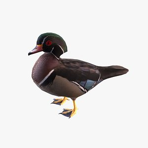 Wood Duck 3D model