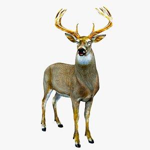 3D model Deer