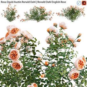 Rosa David Austin Ronald Dahl - rose 01 3D model