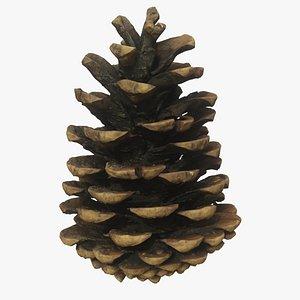 Fir Cone 5 3D model