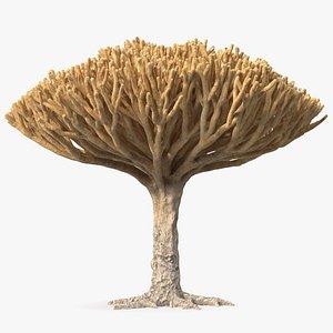 Big Naked Dragon Tree 3D model